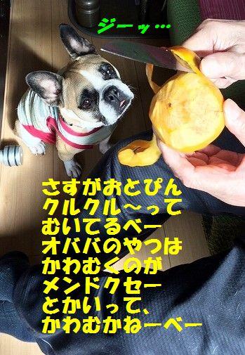IMG_8544_201610241521219df.jpg