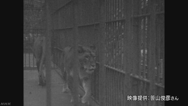 0729_03_lion.jpg