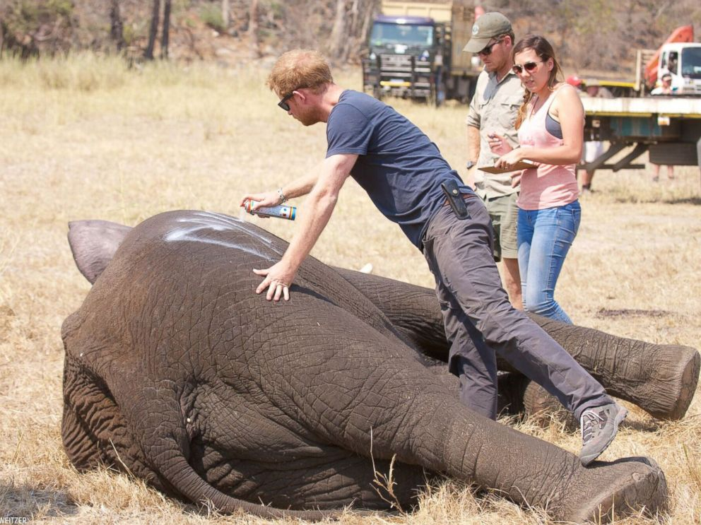 HT-prince-harry-elephant-4-jt-161028_4x3_992.jpg