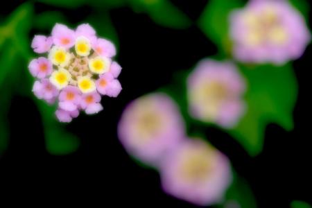 夏色の花園