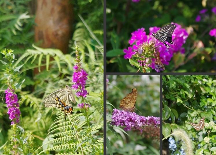 2012-08-03 2012-08-03 002 001-horz