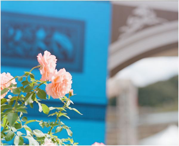 PENTAX67 165mm portra400 2016-10-16 花フェスタ  68200008_R