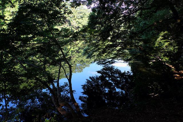 秦野震生湖002