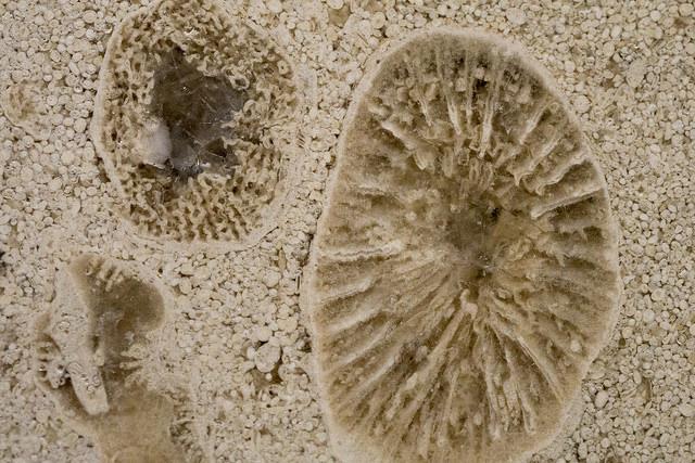 みなとみらい化石001