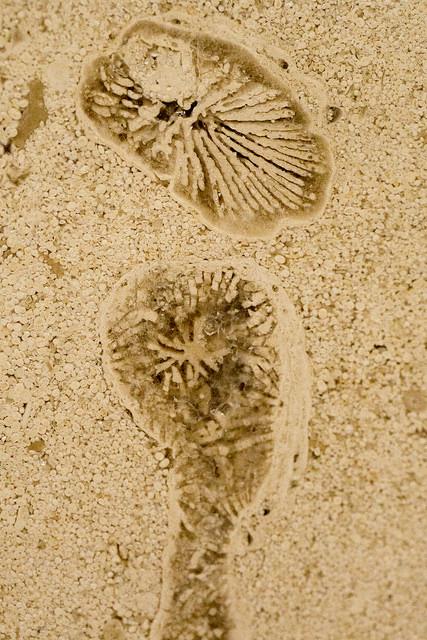 みなとみらい化石003 (2)