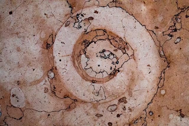 みなとみらい化石005