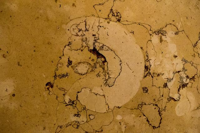 みなとみらい化石012