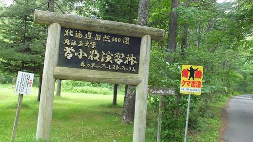 苫小牧北大研究林 (17)