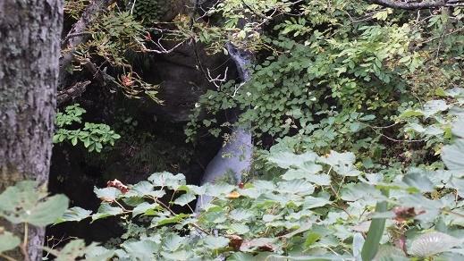 沼岳沢の滝 (16)