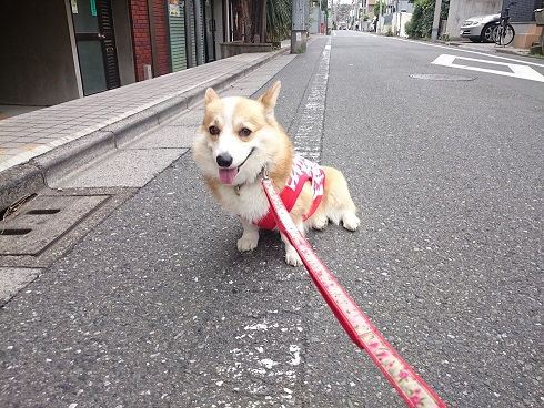 0626コギスト散歩2