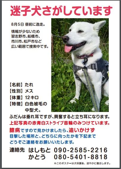 たれちゃん(2016:8:14)