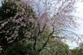 160409fumori03.jpg