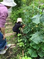野菜収穫1 6・14