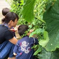 野菜収穫3 7・12