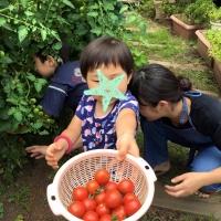 野菜収穫1 7・12