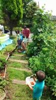 野菜収穫 7・19