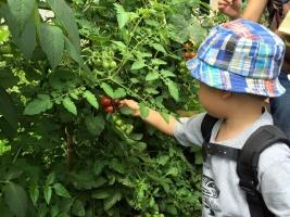 野菜収穫2 7・19