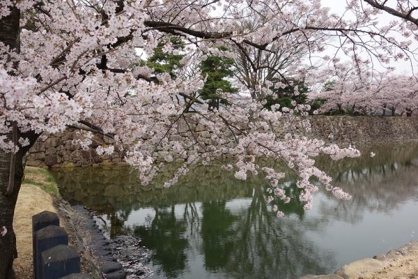 2016.4.10松本城のお堀