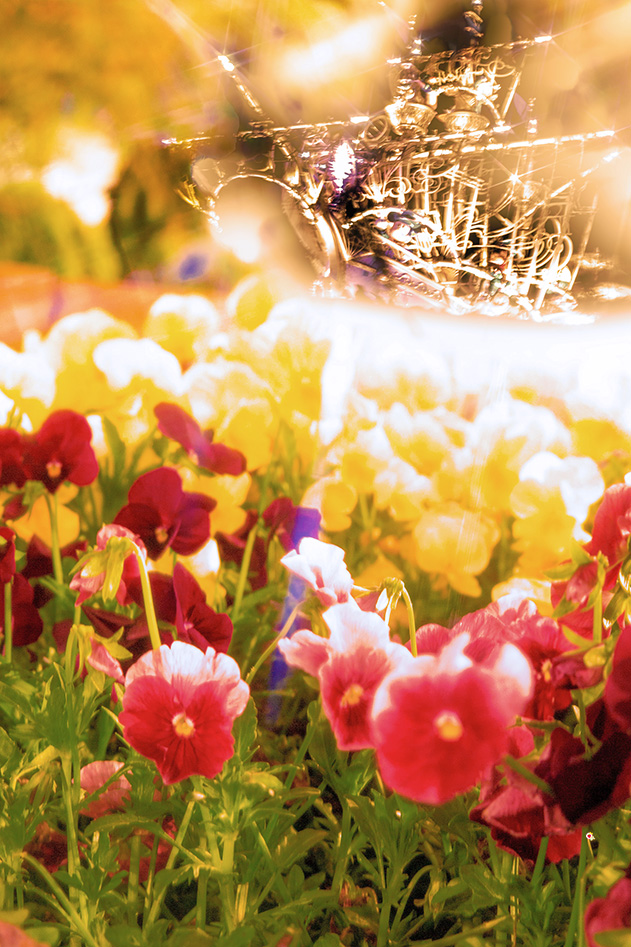 お花とウィングオブウィッシュ号1