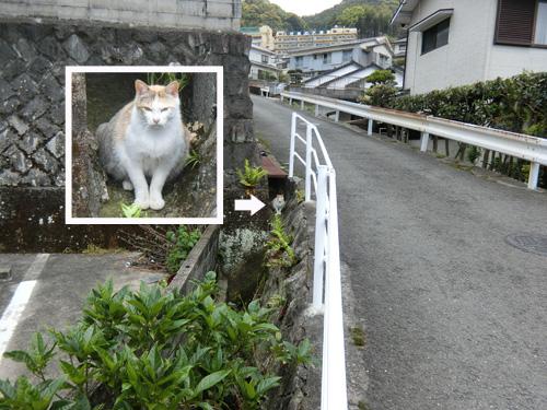 ネコ発見。 ・・・あぁ、ソコね。