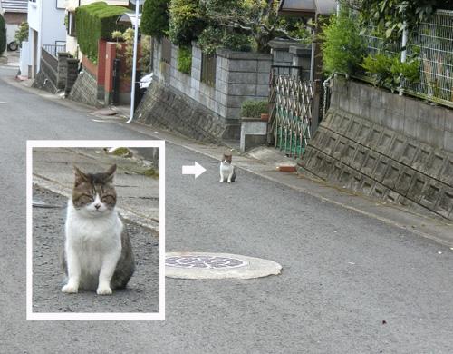 ネコ発見。 よく、笑ってる?って言われるでしょ。