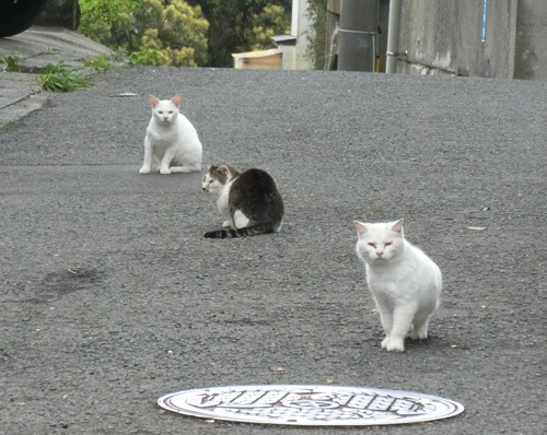 ネコ集会。