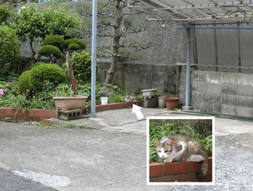ネコ発見! いつものネコだね。