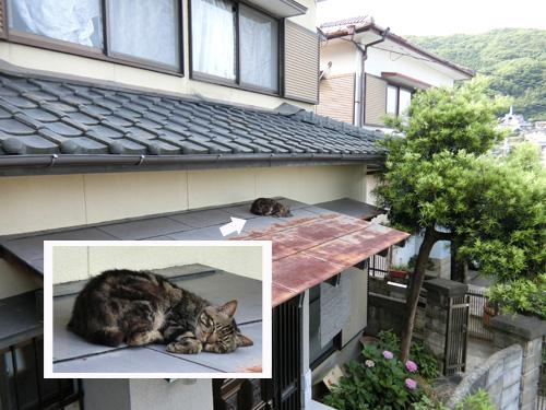 屋根の上の・・・ネコ発見。