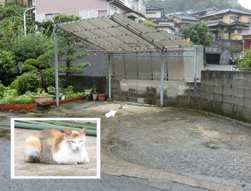 雨の日なのに、ネコ発見。