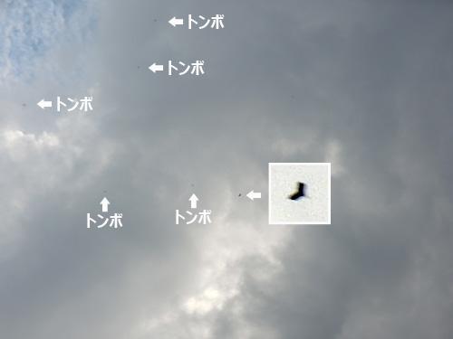 子機03、 この後は動画をどうぞ~!