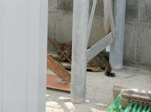 子猫発見。 でも逃げられました。