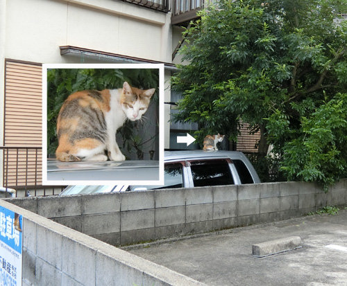 本日のネコ発見、その2。