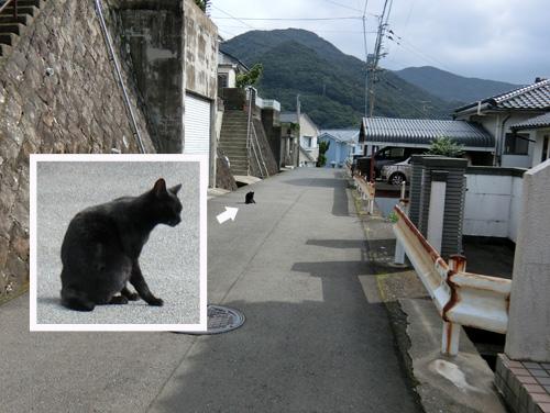 ネコ発見。あっちむいて・・・。