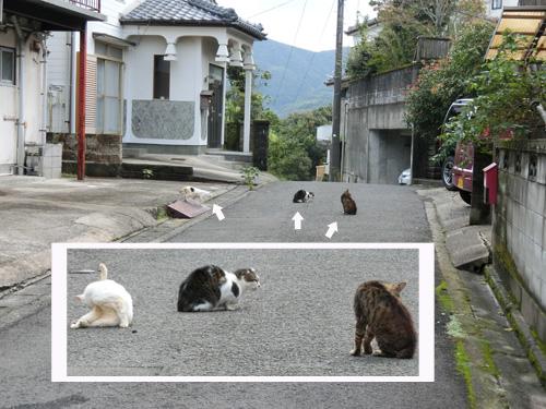 ネコ発見。 そして集会中。