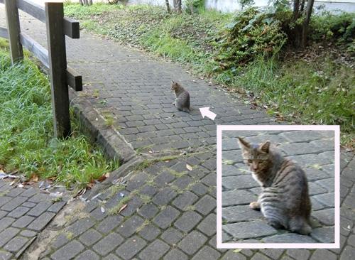 ネコ発見! その3。 なにっ?