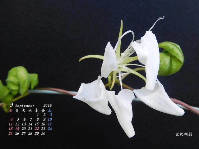 長月カレンダー
