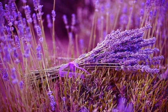 beautiful-spiritual-lavender.jpg