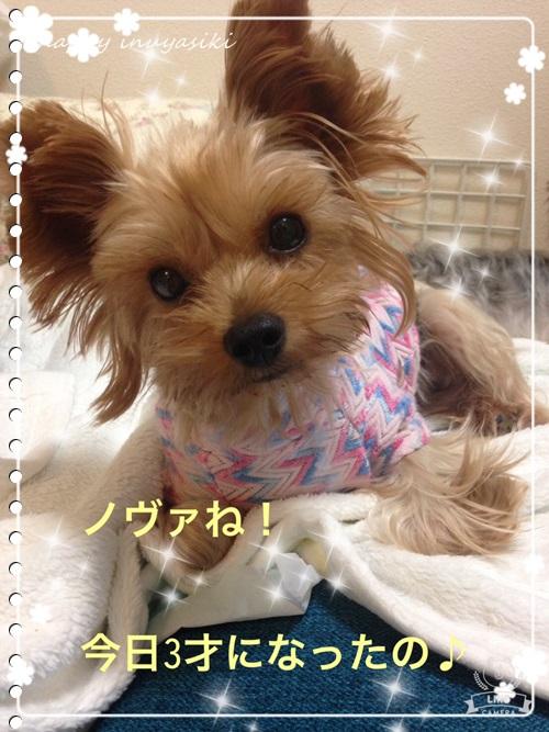 mini16IMG_8649-20161025.jpg