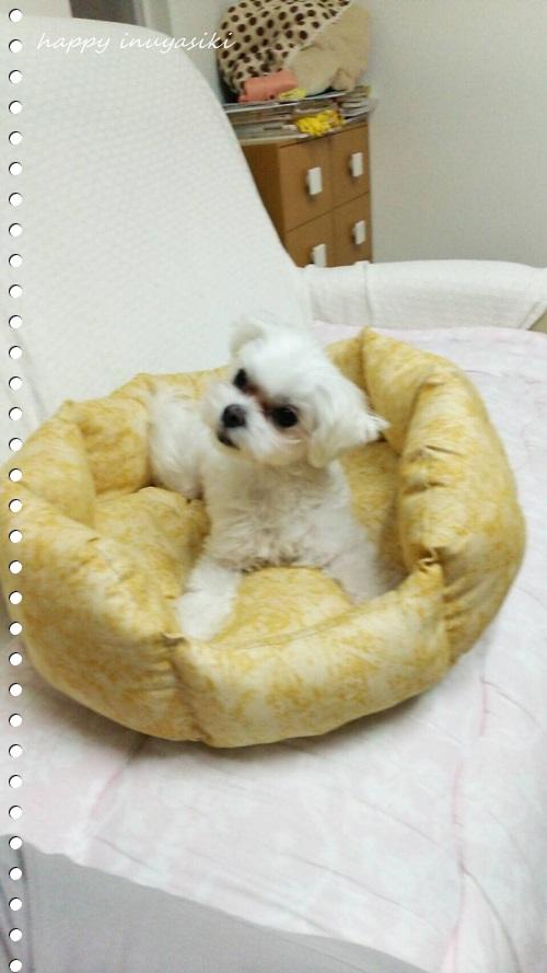 mini16IMG_9136-20161029.jpg