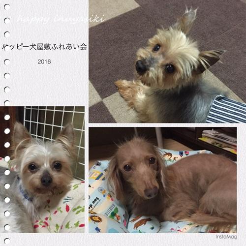 mini16IMG_9175-20161029.jpg