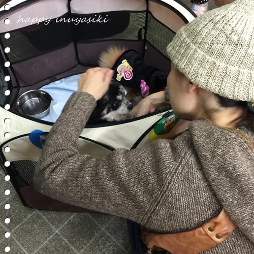 mini16IMG_9283-20161101.jpg