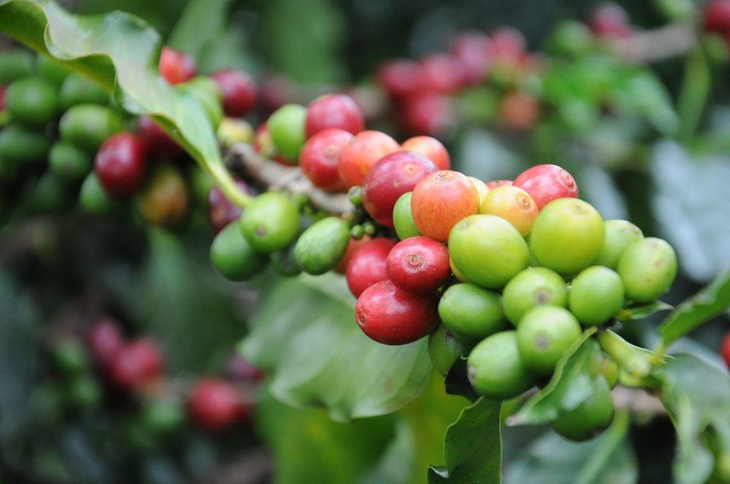 coffee-747604_960_720_1024.jpg