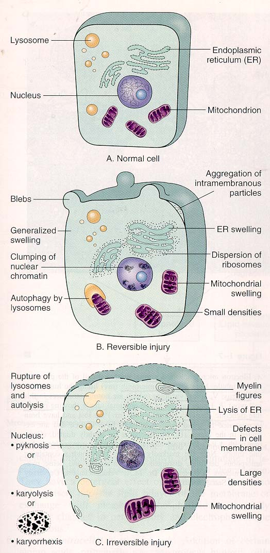 不可逆cell in