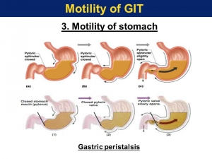 gastric motility2