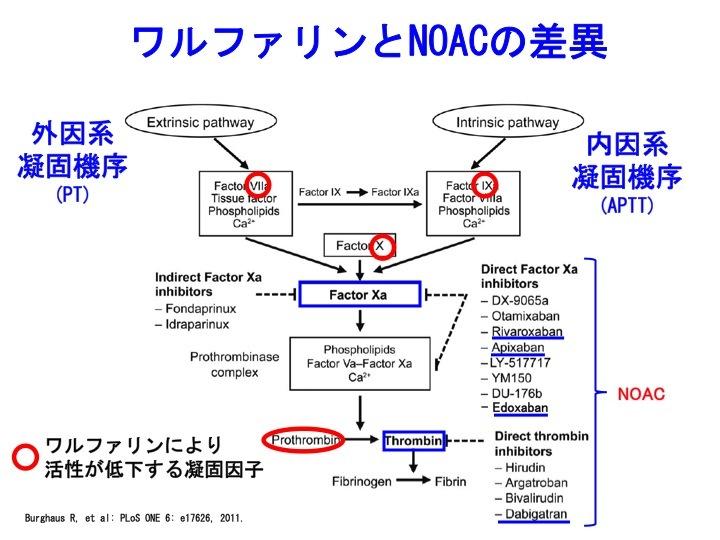NOAC.jpg