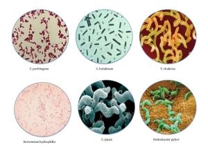 bacteriology-1-638.jpg