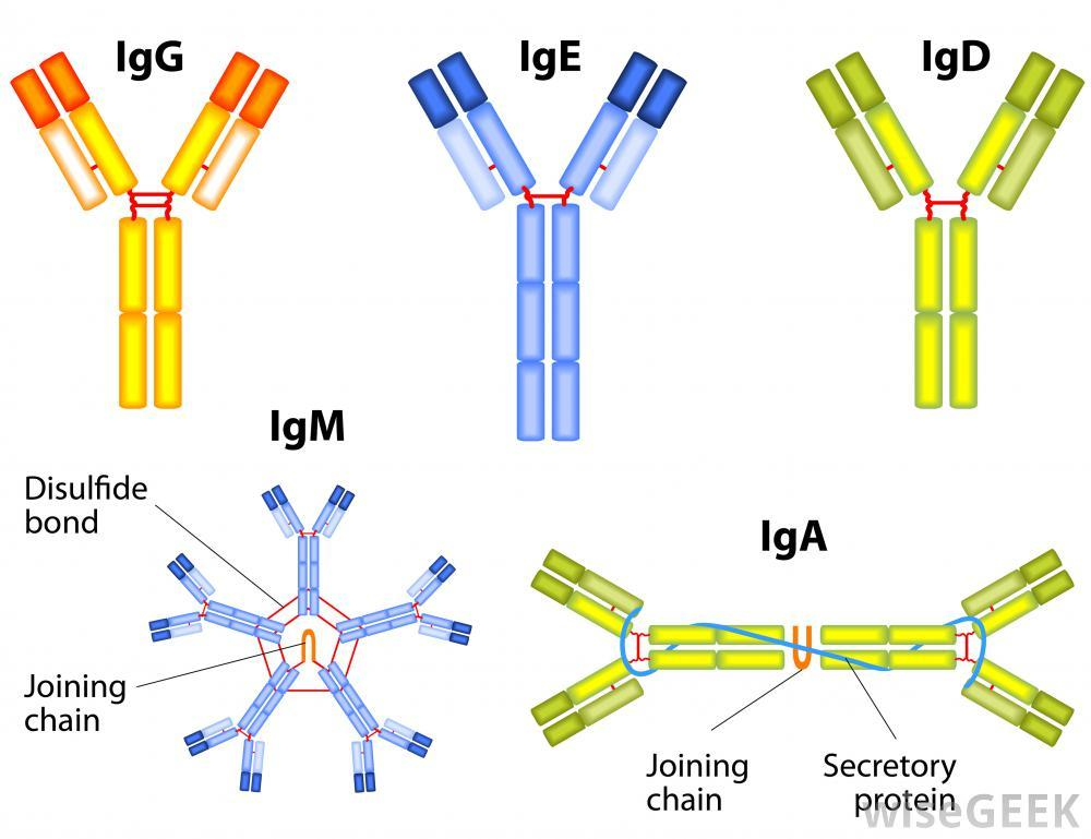 types-of-antibodies.jpg