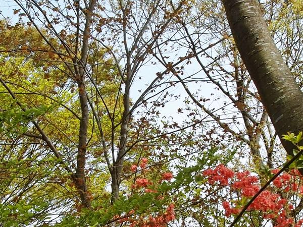 芽吹きの色合い
