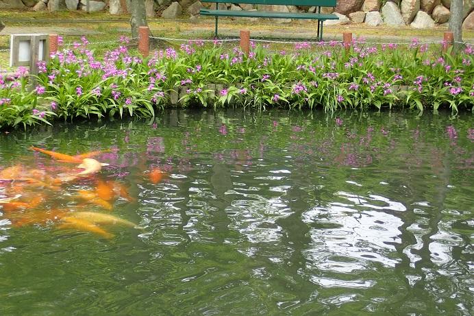 鯉とシランs