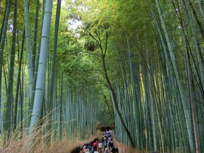 嵐山竹林2